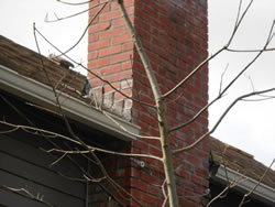 Chimney Inspection Portland Oregon