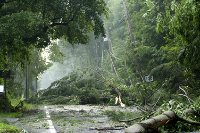 Photo of trees down after storm