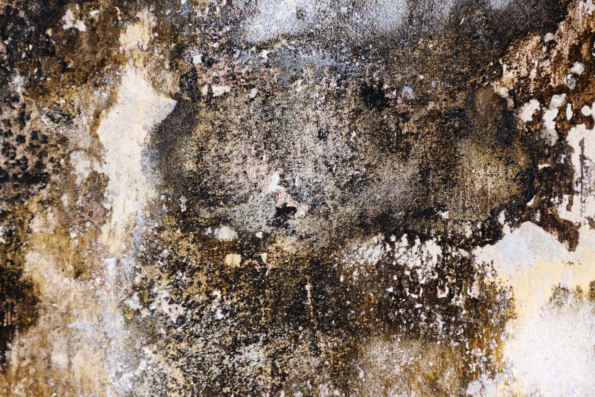 surviving toxic mold mold exposure mold illness mold testing mold prevention. Black Bedroom Furniture Sets. Home Design Ideas