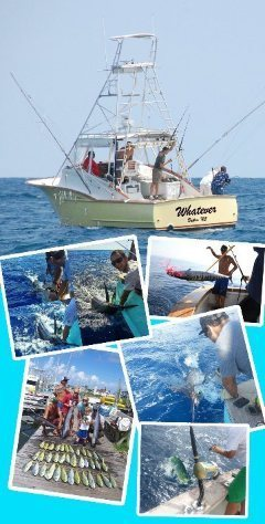 Hatteras fishing charter captain whatever sportfishing for Hatteras fishing charters